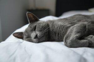 Grey Cat Sleeping Inside Bass Drum